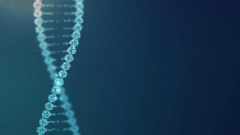 DNA-wordpress default size